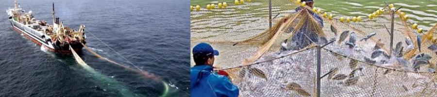 Pesca y Producción Acuícola